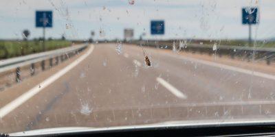 Insekten auf der Scheibe richtig entfernen